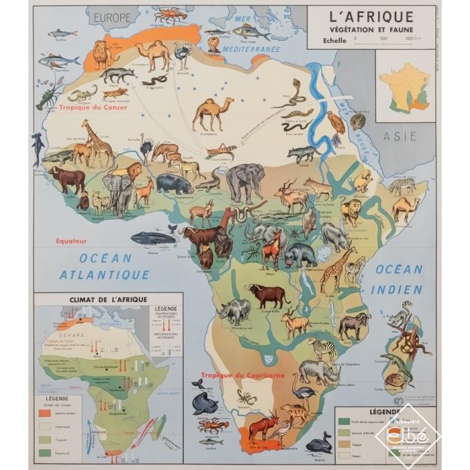 Vintage poster - J. Anscombre -  - Carte scolaire illustrée - L'Afrique végétation et faune - 35,6 by 31,3 inches